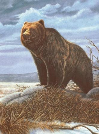 Medvěd,Malování,podle,čísel,