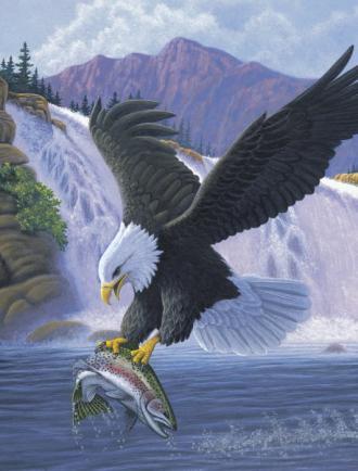 Orel na lovu,Malování,podle,čísel,