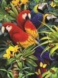 Papoušci,Malování,podle,čísel,